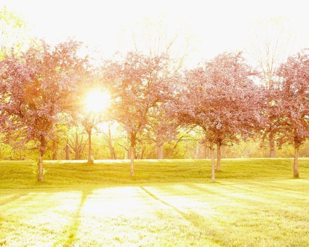Glimmer of a New Day - Spring Apple Trees Photograph
