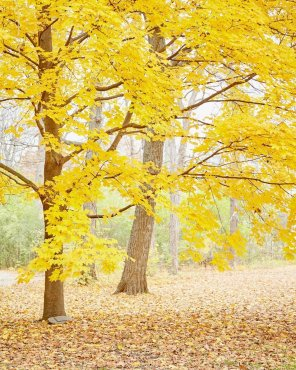 Amber Clouds - Autumn Landscape Photograph Art Print