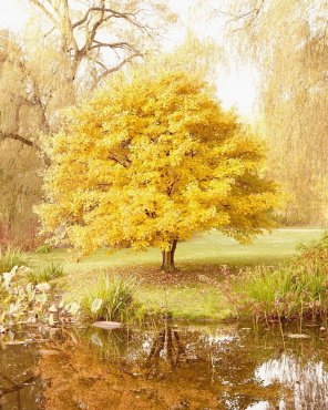 Autumn Ambiance - Yellow Tree Photography Print