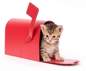 striped kitten in a red mailbox on a white background