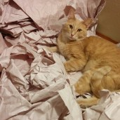 Finn is most fond of the pile of packing materials.