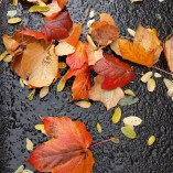 Parking lot leaves. There is no end to the gorgeous here.