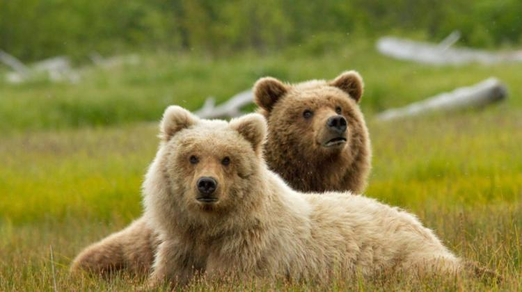 Five Reasons To Travel To Alaska