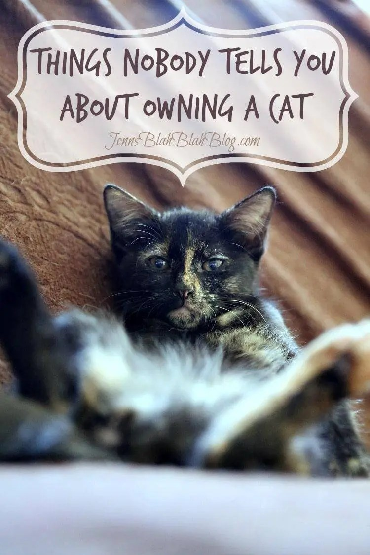 Several Things Nobody Tells You about Owning a Cat