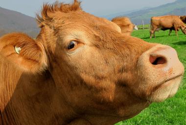 Milch macht keine starken Knochen