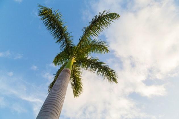 palmier-ciel-bleu-vacances-soleil_30062015-IMG_8595