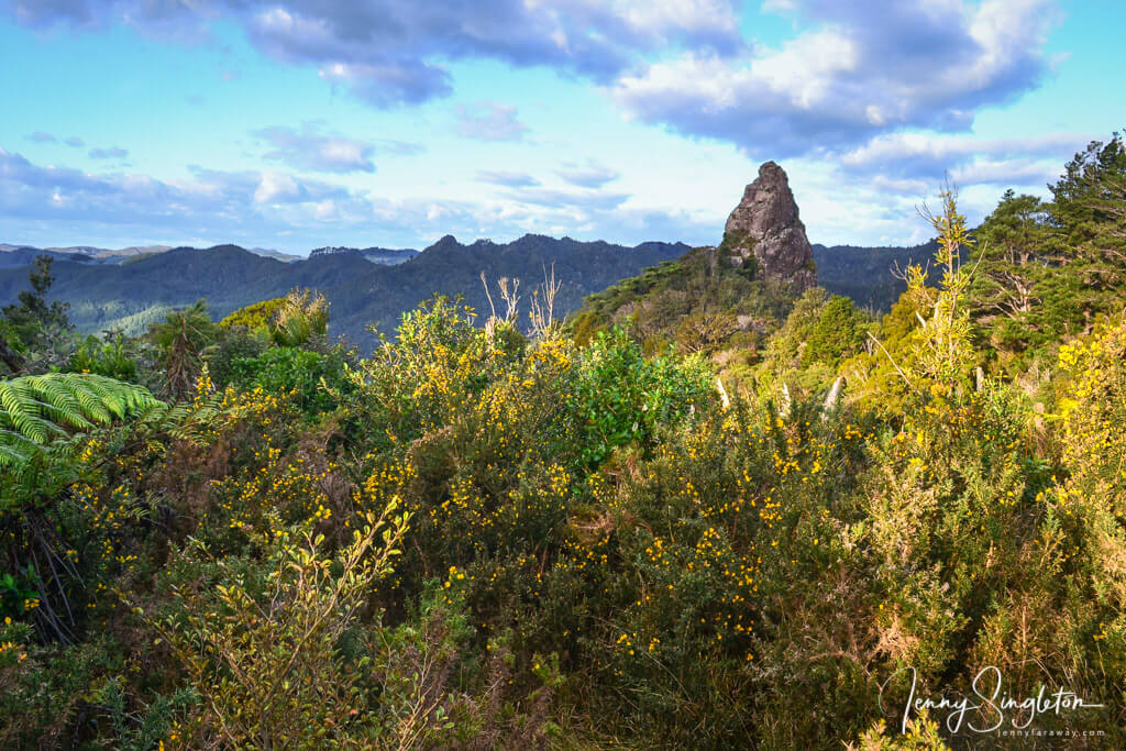 Views along the path up to Castle Rock, Coromandel, New Zealand