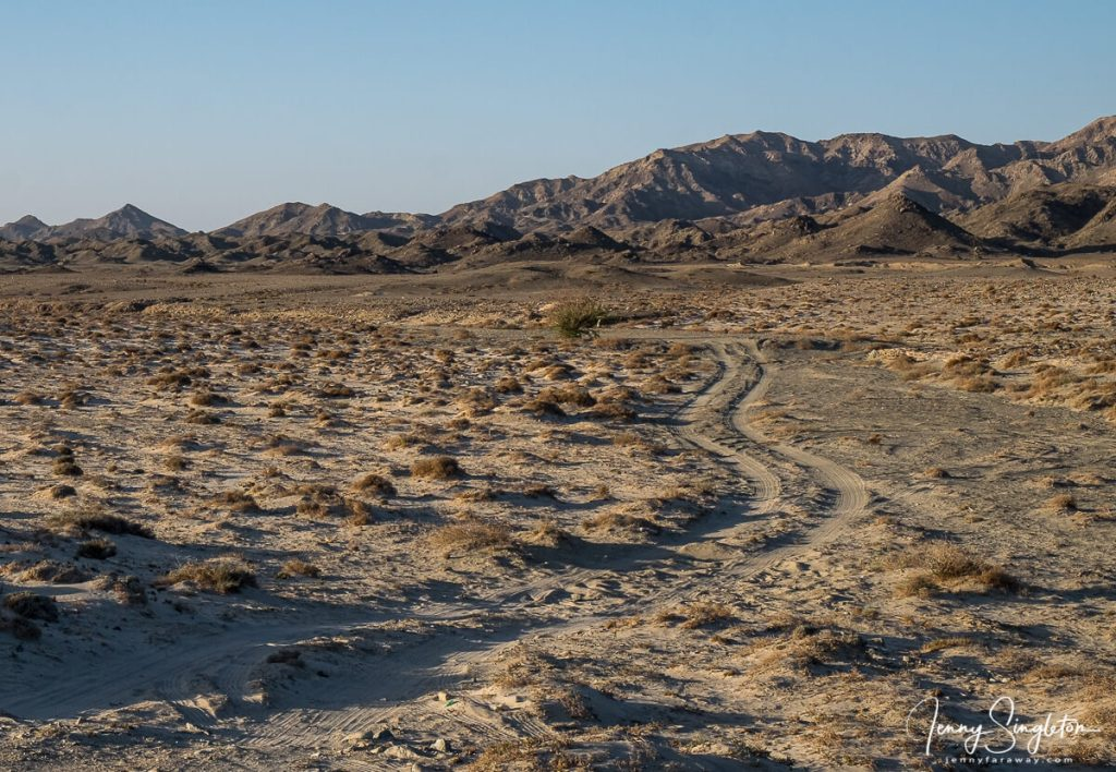 A dirt road winds off into the hills between scrubby bushes on Masirah Island