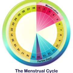 Menstrual Cycle Diagram With Ovulation Four Way Switch Wiring Multiple Lights A Girls 39 Guide To Optimizing Performance The Flow Of