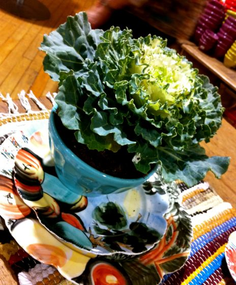 Ornamental cabbage in a bowl