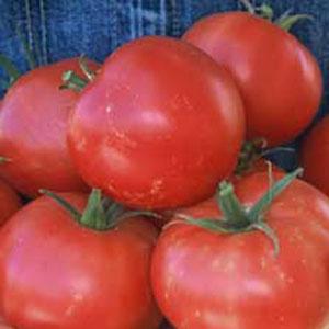 Rose de Berne Tomato