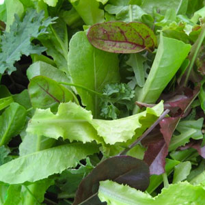 Ultimate Salad Bowl