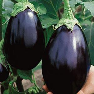 Black Beauty Eggplant