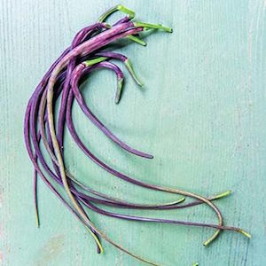 Dragon's Tail Radish