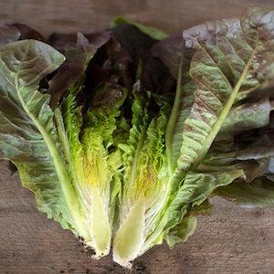 Cimarron Lettuce