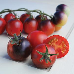 Indigo Cherry Drops Tomato