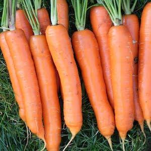 Yaya Carrot
