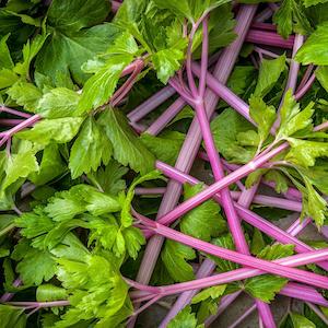 Pink Plume Celery