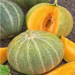 Petit Gris de Rennes Melon