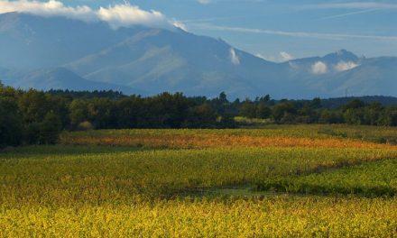 Hoe herken je een wijn uit de Languedoc?