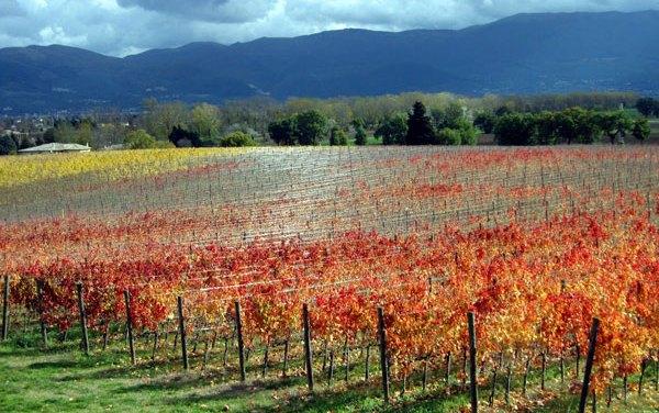 Wijnreis voor gewone mensen – Een reisverslag voor liefhebbers van het Dolce Vita