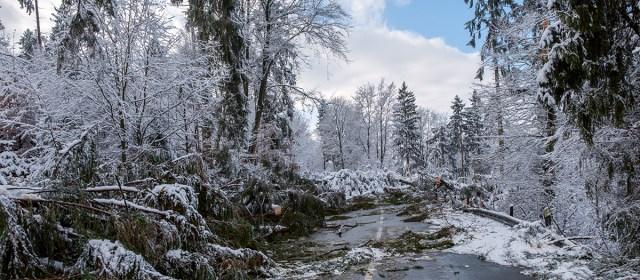 Orkan Friederike – die Waldschäden im Solling und an der B241