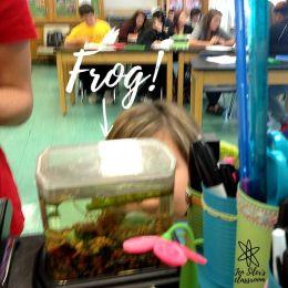 frog on desk