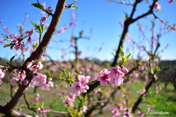 yarra valley in spring