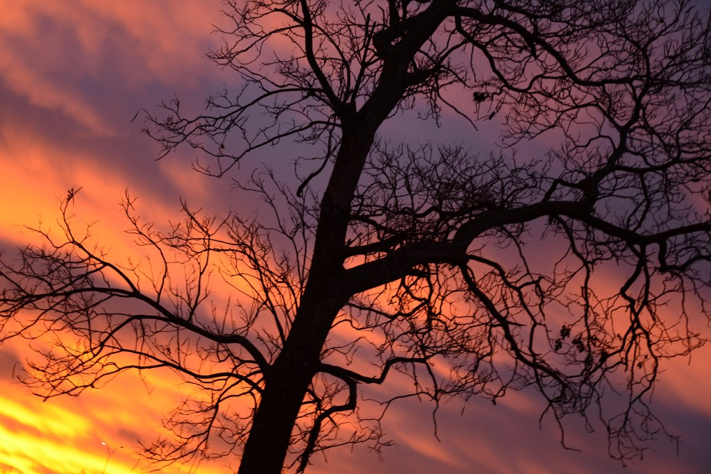 Orange and purple sunrise