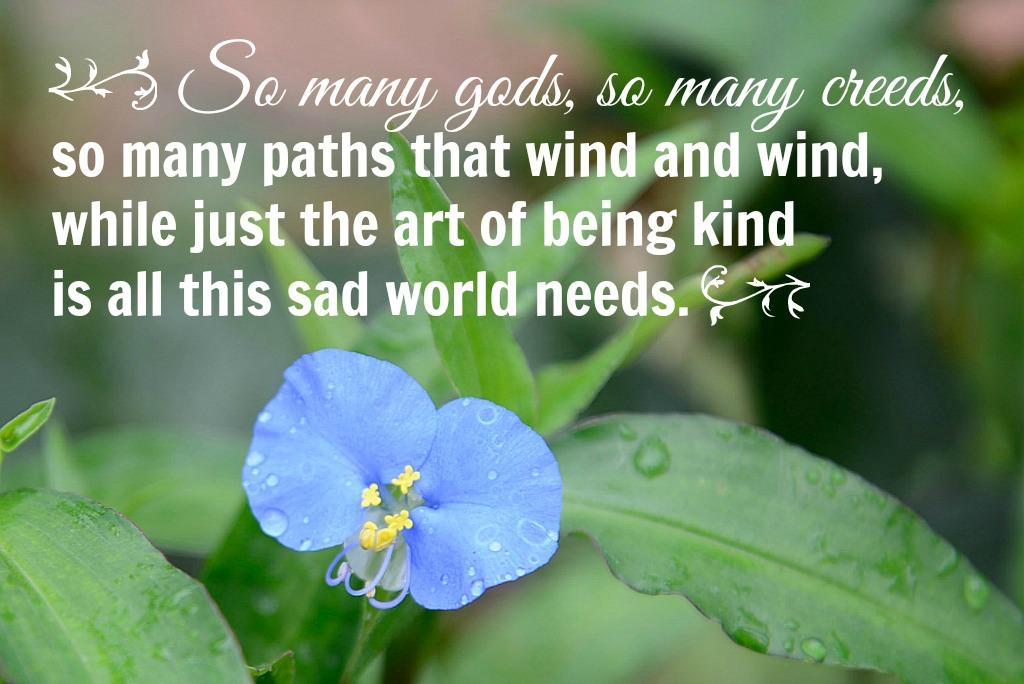 blue flower on wandering jew2