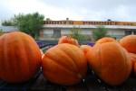 Pumpkins, Farmer's Market