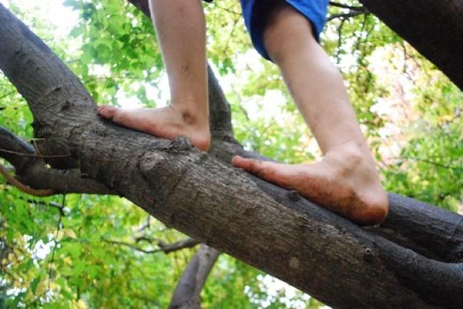 Climbing Trees Barefoot
