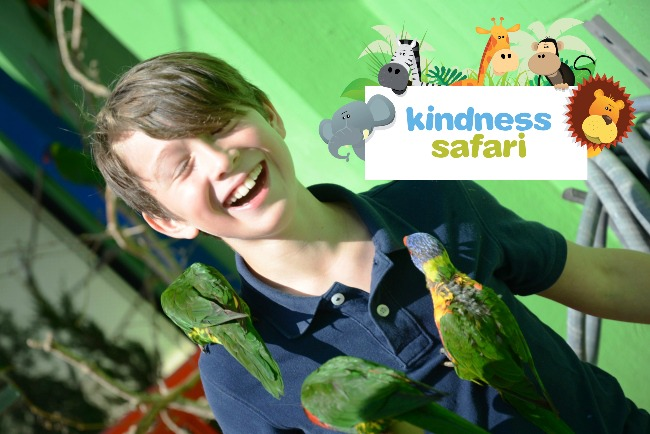 Three Lorikeets Kindness Safari