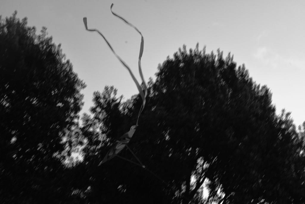 Tumbling Kites