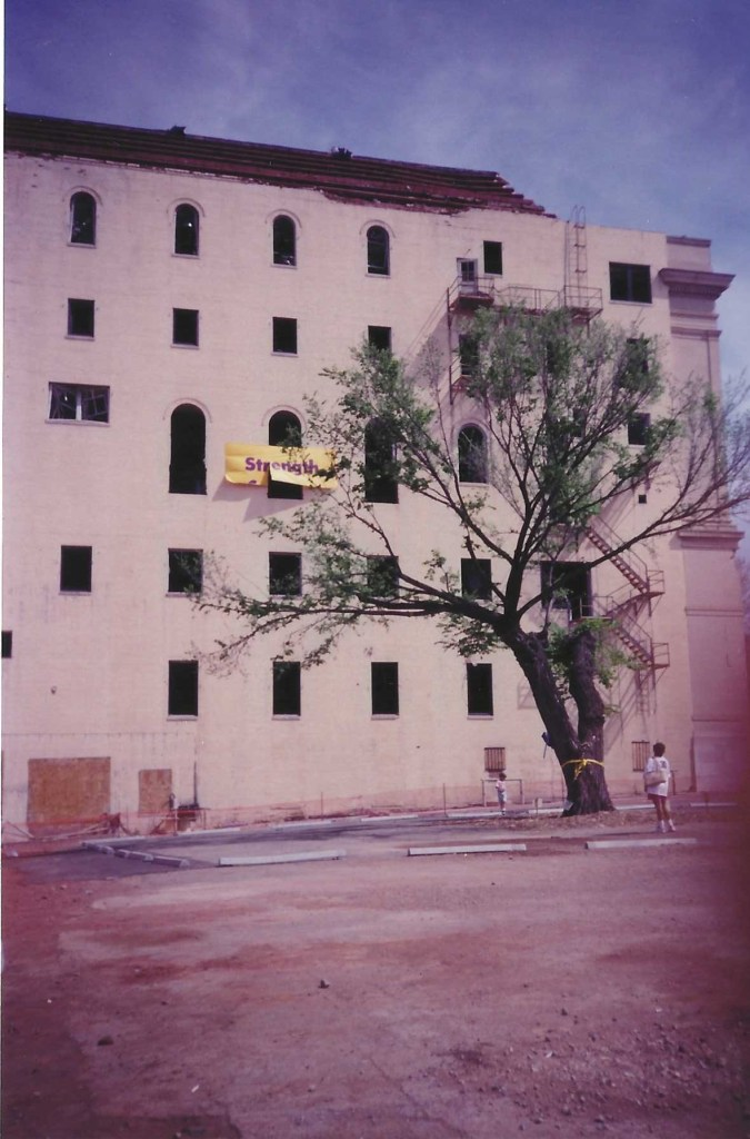 The Oklahoma Survivor Tree shortly after the Oklahoma bombing, pictured here with the Journal Record Building in the background.
