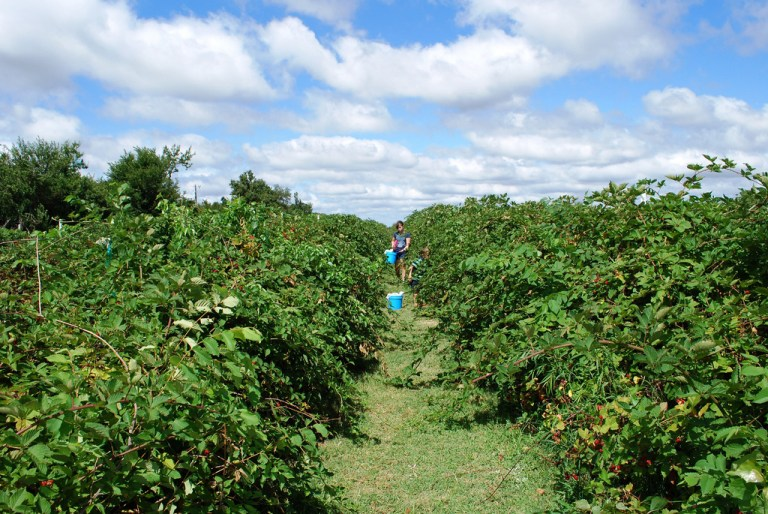 Sunberry Orchard