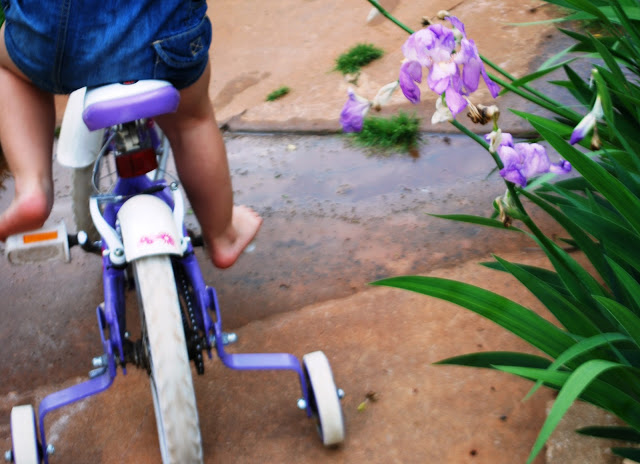 Little girl on a purple bike with purple irises