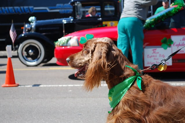 Dogs in the parade