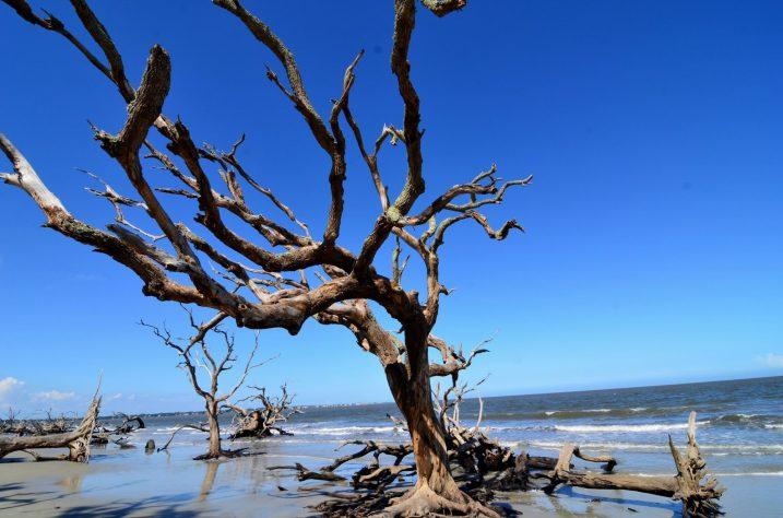 Driftwood Beach at Jekyll Island10