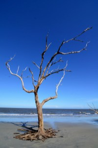 Driftwood Beach at Jekyll Island27