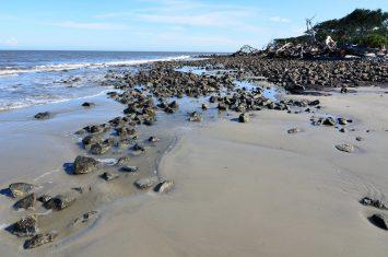 Driftwood Beach at Jekyll Island3