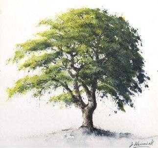 """Ash tree £620 10""""x 11"""""""