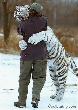 Tiger hugging a person