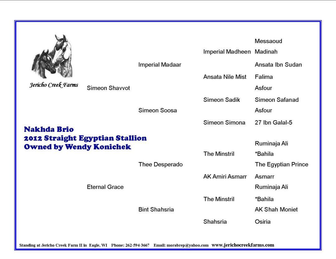 Nakhda Brio Straight Egyptian Arabian stallion pedigree