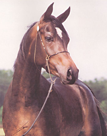 Eternal Grace, dam of Nakhda Brio.