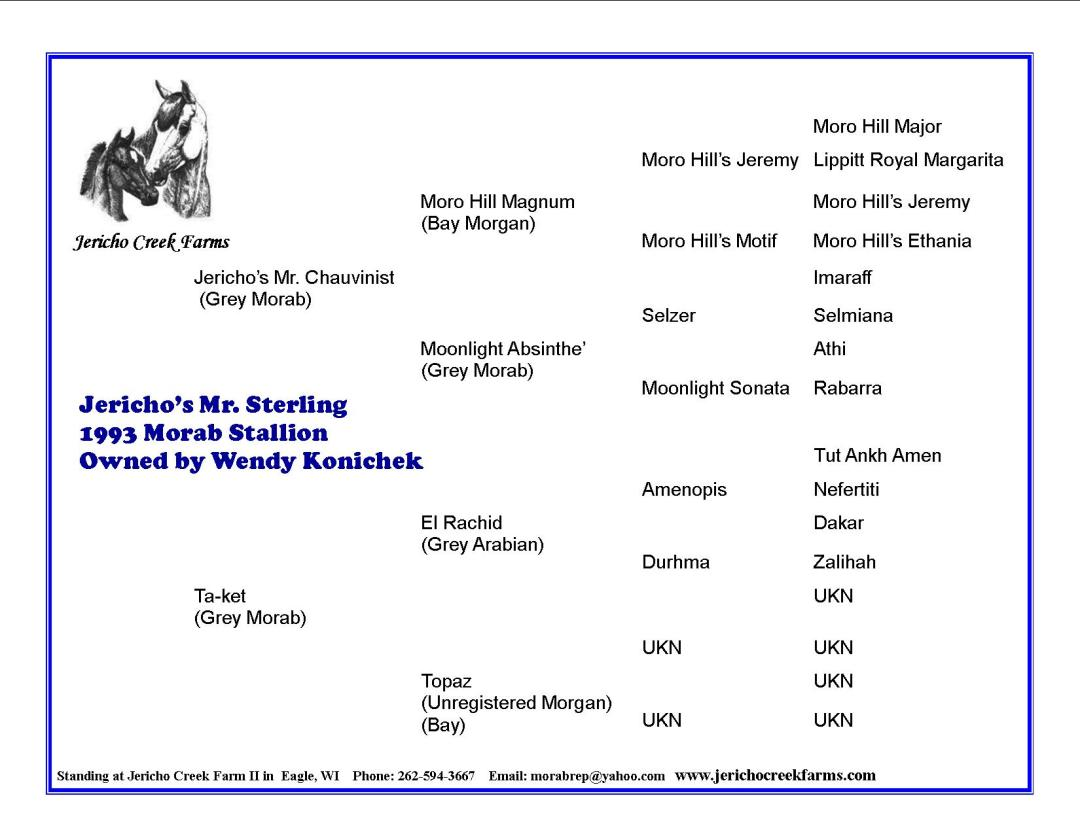 Jericho's Mr. Sterling, Morab stallion pedigree