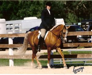 Instructor Wendy Konichek, riding the Morab stallion Sir RAF Royale.
