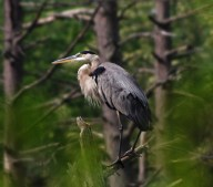 Heron-close