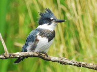 KingFisher-WeaverLake