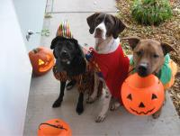 Best Halloween Costumes For Your Dogs or Pets 2014